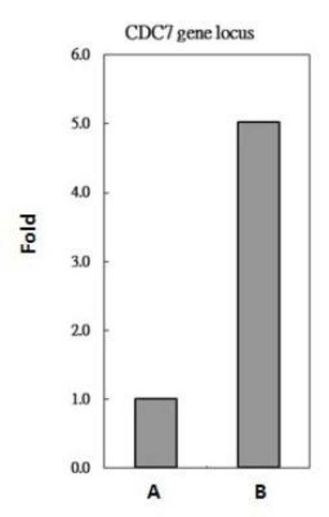 anti-L3MBTL2, Polyclonal, Novus Biologicals 0.1mg; Unlabeled:Life Sciences