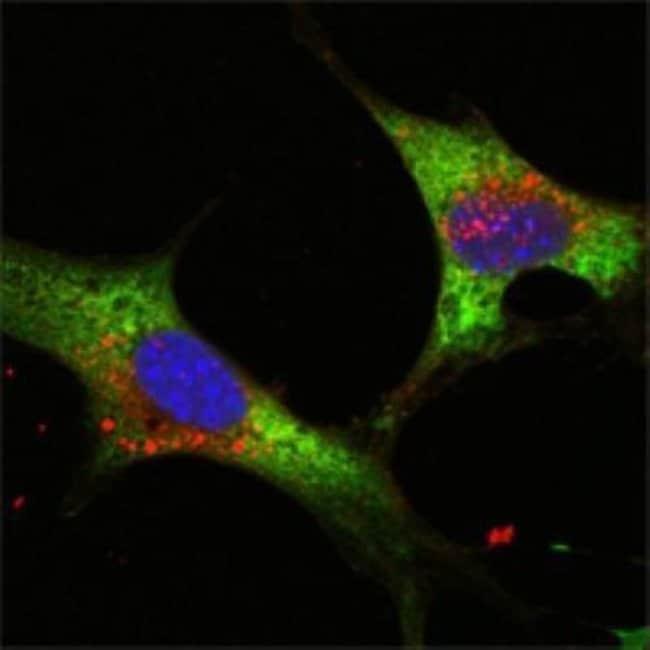 anti-LIN-28A, Clone: 6D1F9, Novus Biologicals 0.1mL; Unlabeled:Life Sciences