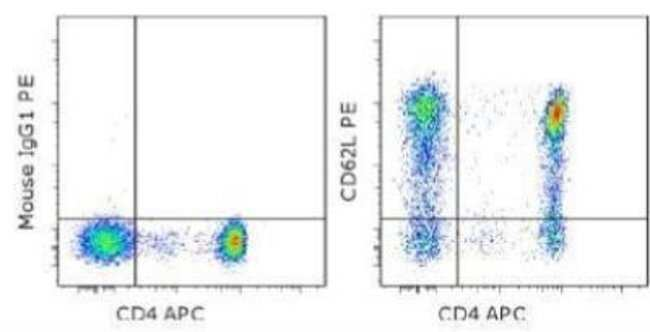 anti-L-Selectin/CD62L, Clone: DREG56, Novus Biologicals 0.1mg; Unlabeled:Life