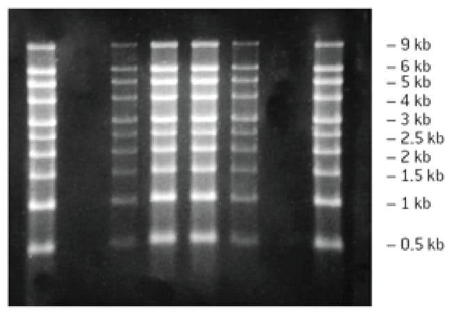 Lonza Reliant Precast RNA Gels:Life Sciences:Biochemicals and Reagents