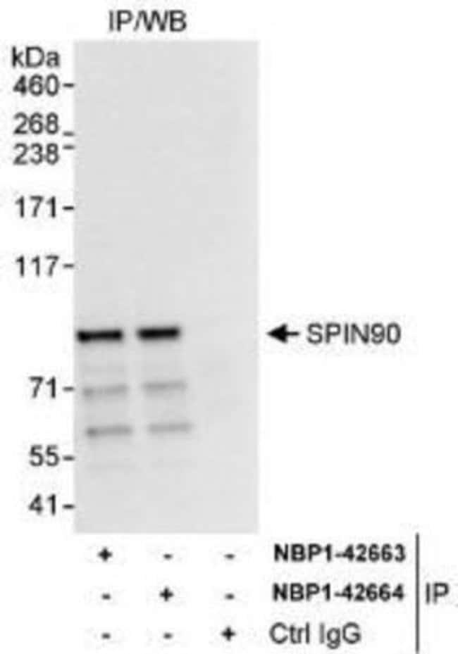 anti-NCKIPSD, Polyclonal, Novus Biologicals 0.1mg; Unlabeled:Life Sciences