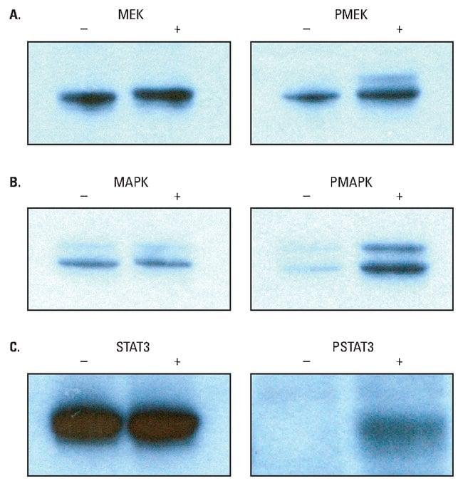 Thermo Scientific Halt Phosphatase Inhibitor Single-Use Cocktail :Life