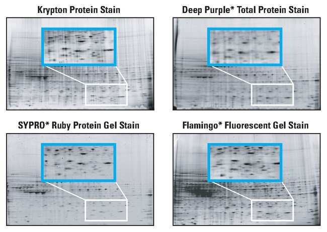 Thermo Scientific Krypton Fluorescent Protein Stain:Electrophoresis, Western