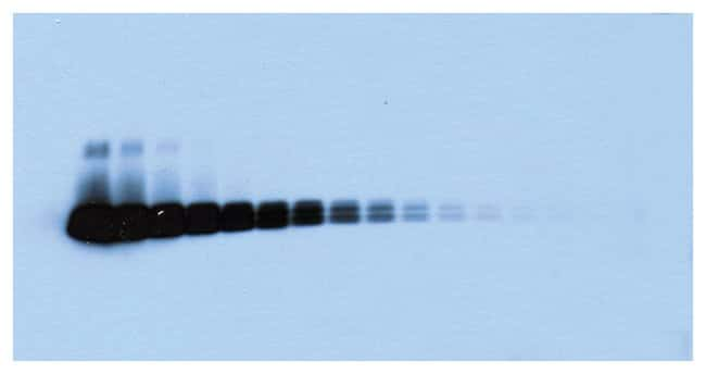 Thermo Scientific SuperSignal West Pico Chemiluminescent Substrate:Electrophoresis,