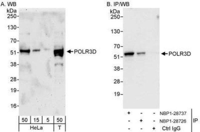 anti-POLR3D, Polyclonal, Novus Biologicals 0.1mL; Unlabeled:Life Sciences