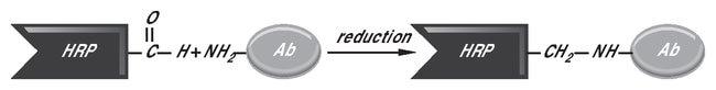 Thermo Scientific EZ-Link Plus Activated Peroxidase:Electrophoresis, Western