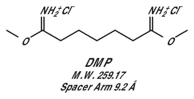 Thermo Scientific DMP (dimethyl pimelimidate):Life Sciences:Protein Biology