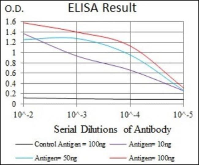 Mouse anti-Raf-1, Clone: 4G4, Novus Biologicals:Antibodies:Primary Antibodies