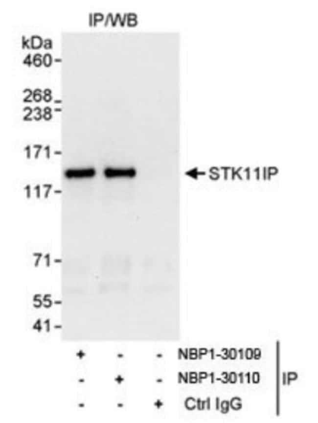 anti-STK11IP, Polyclonal, Novus Biologicals 0.1mL; Unlabeled:Life Sciences