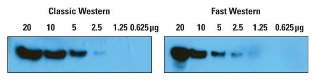 Thermo Scientific Pierce SuperSignal West Femto Fast Western Blot Kit:Electrophoresis,