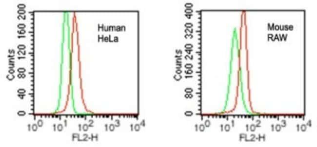 anti-VprBP, Polyclonal, Novus Biologicals:Antibodies:Primary Antibodies