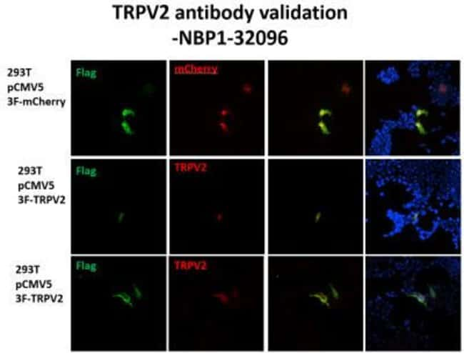 anti-VRL1, Polyclonal, Novus Biologicals 0.1mL; Unlabeled:Antibodies