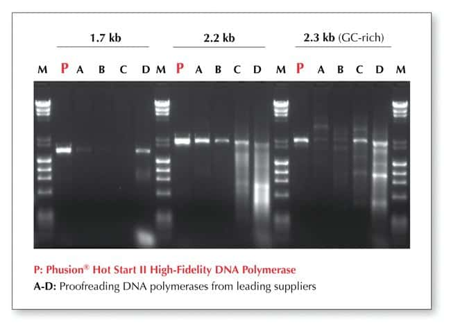 Thermo Scientific Phusion Hot Start II DNA Polymerase (2 U/L):Life Sciences:Biochemicals