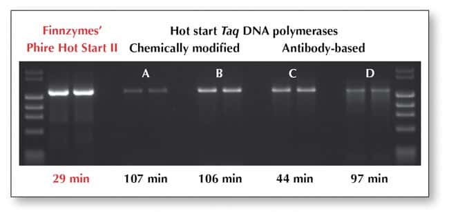 Thermo Scientific Phire Hot Start II DNA Polymerase:Life Sciences:Biochemicals