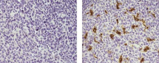 CD68, Biotin, clone: 815CU17, eBioscience™ 100μg; Biotin CD68, Biotin, clone: 815CU17, eBioscience™