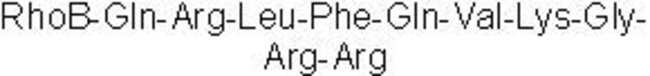 Tocris Bioscience PBP 10  1mg:Life Sciences