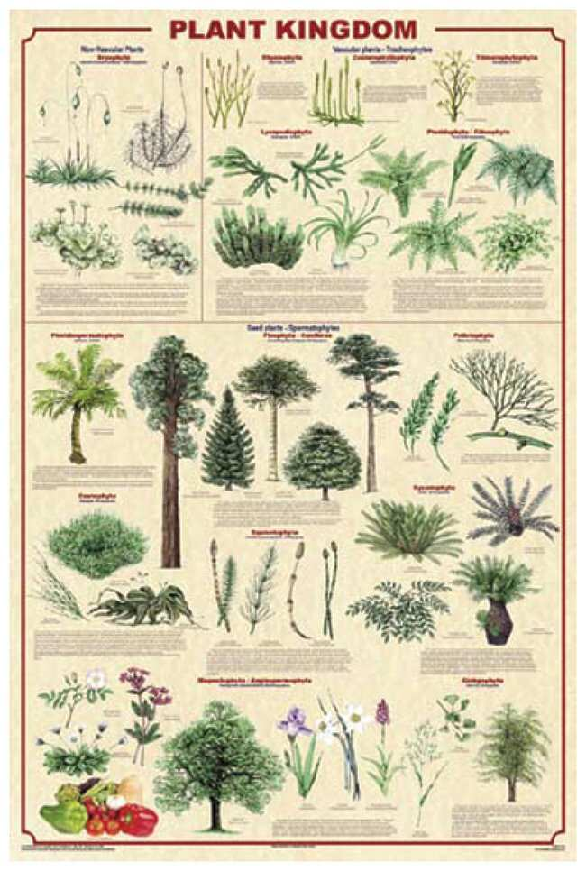 Plant Kingdom Poster Laminated; Legend: Plant Kingdom 2