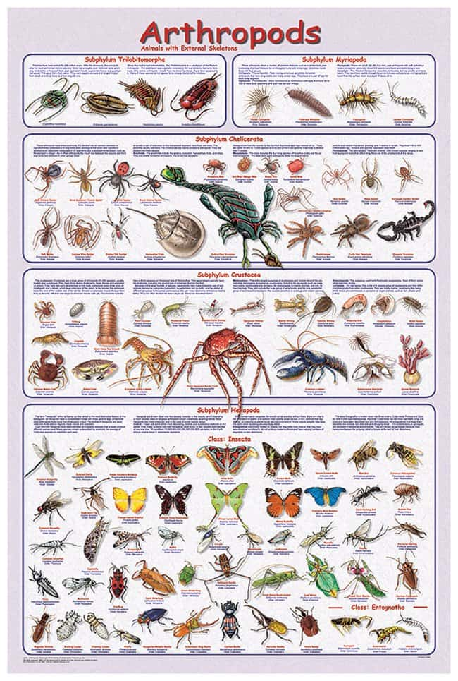 Arthropods Poster Laminated; Legend: Arthropods