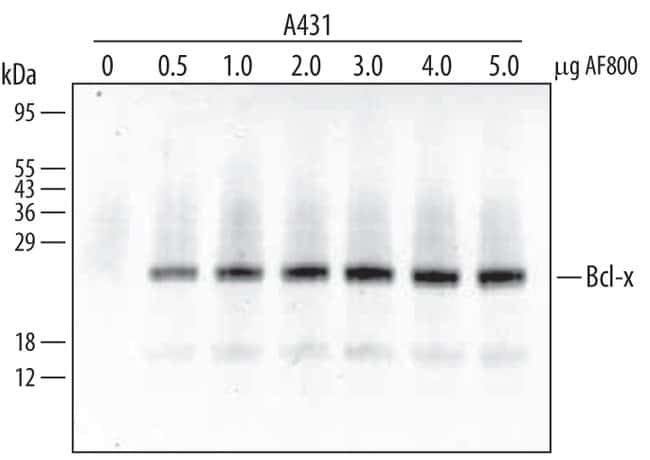 Bcl-x Rabbit anti-Human, Mouse, Polyclonal, R 50µg; Unlabeled