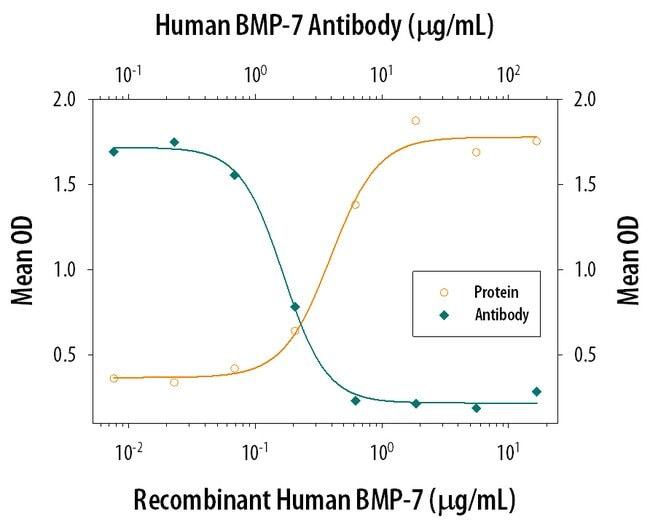 BMP-7 Mouse anti-Human, Clone: 164311, RD Systems:Antibodies:Primary Antibodies