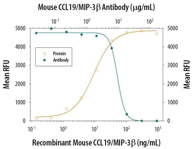 CCL19/MIP-3 beta Goat anti-Mouse, Polyclonal, R 25µg; Unlabeled:Life