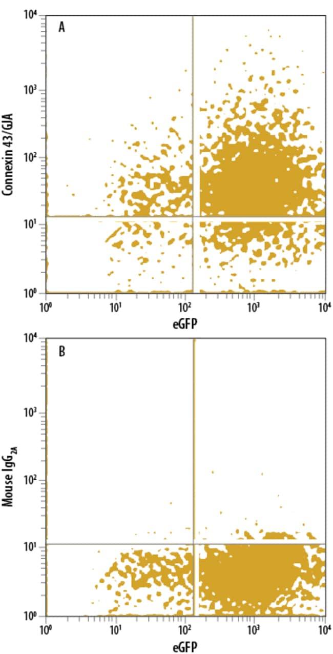 anti-Connexin 43/GJA1, APC, Clone: 578618, RD Systems 100 Tests; APC:Antibodies