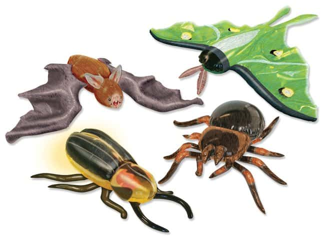 Giant Inflatable Nocturnal Creatures Grades K+; Set of 4:Education Supplies