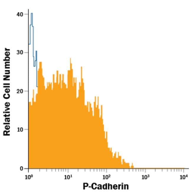 anti-P-Cadherin, PE, Clone: 106020, R 100 Tests; PE