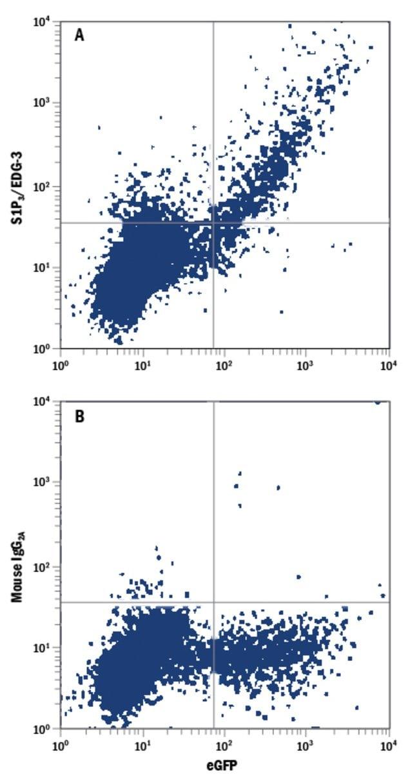 anti-S1P3/EDG-3, PE, Clone: 776808, R 100 Tests; PE