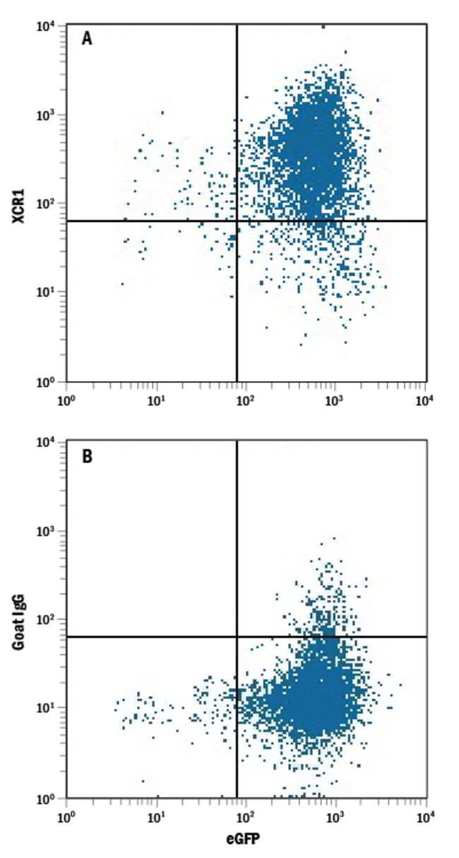anti-Human XCR1, PE, Polyclonal, RD Systems 25 Tests; PE:Antibodies