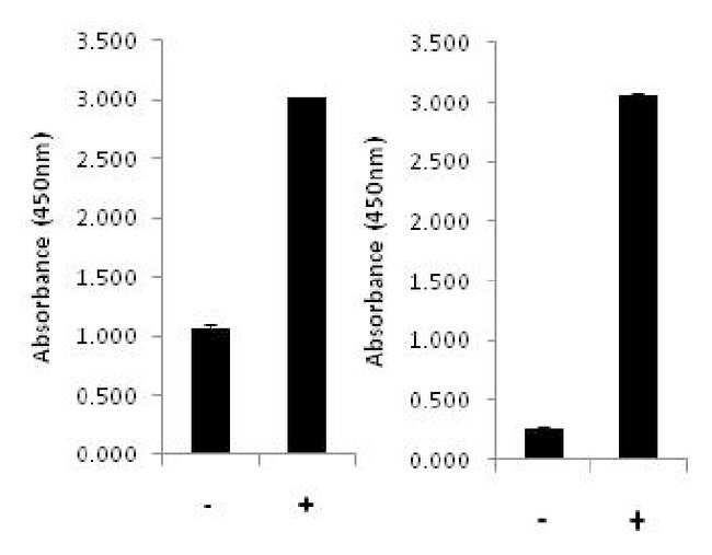 Invitrogen p53 (Total/Phospho) Human InstantOne ELISA Kit  96 Tests:Electrophoresis,