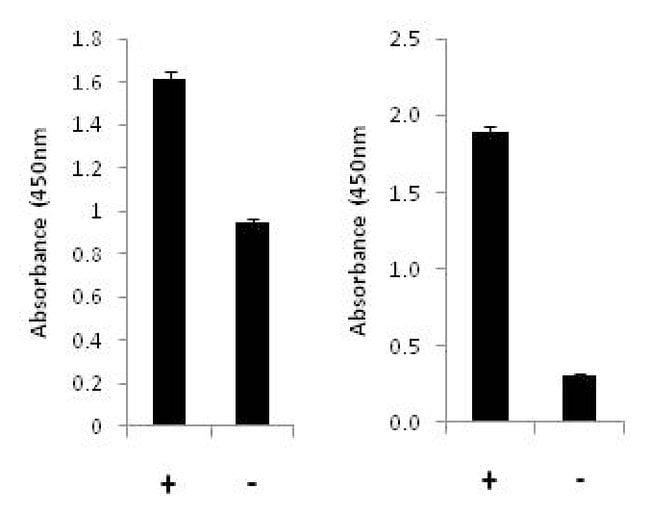 Invitrogen p70 S6 Kinase (Total/Phospho) Multispecies InstantOne ELISA