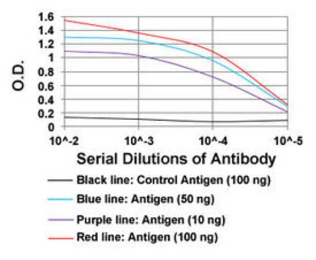 TIE1 Mouse anti-Human, Clone: 8D12B10, Abnova 100μg; Unlabeled:Antibodies