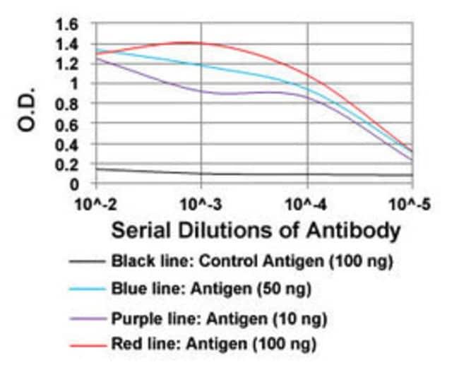 NEFM Mouse anti-Human, Clone: 2G12, Abnova 100μg; Unlabeled:Antibodies