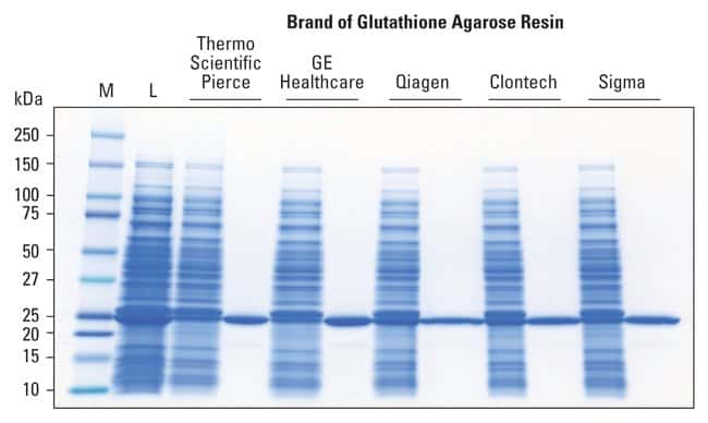Thermo Scientific Pierce Glutathione Chromatography Cartridges:Life Sciences:Protein