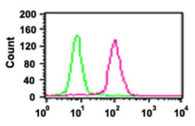 RELA Mouse anti-Human, Mouse, Clone: 112A1021, Abnova 50μg; Unlabeled:Antibodies