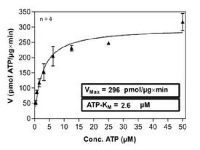 Abnova Human MAPK1 (NM_002745, 1 a.a. - 360 a.a.) Full-length Recombinant