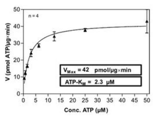 Abnova Human IKBKE (NM_014002, 1 a.a. - 716 a.a.) Full-length Recombinant