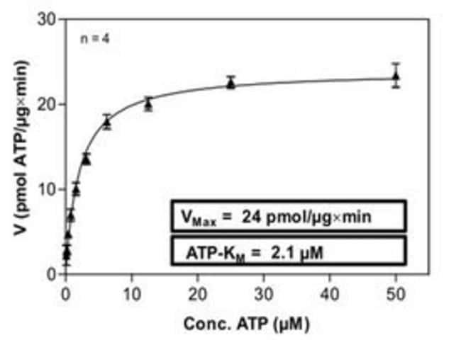 Abnova Human JAK2 (NM_004972.2, 717 a.a. - 1132 a.a.) Partial Recombinant