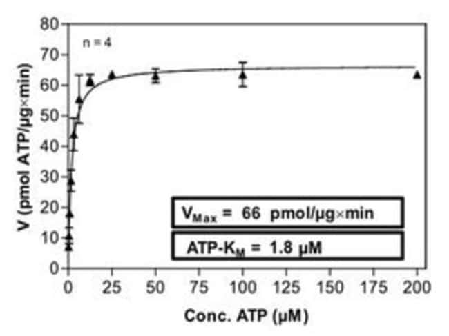 Abnova Human LCK (NM_005356, 1 a.a. - 509 a.a.) Full-length Recombinant