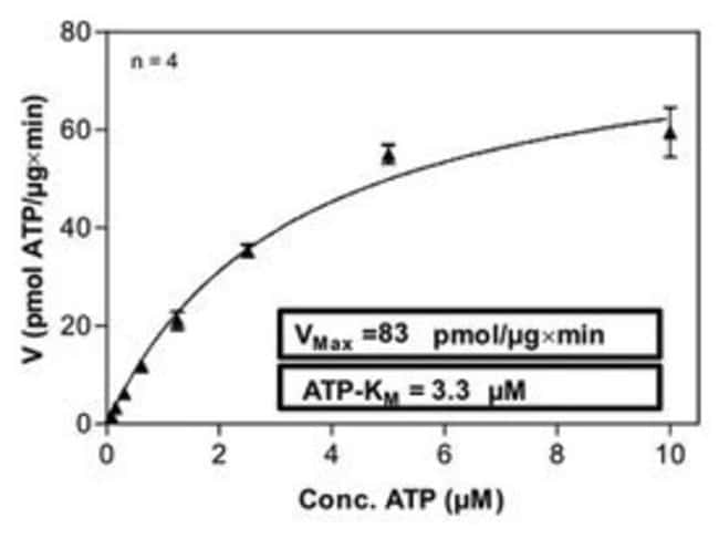 Abnova Human PRKCZ (Z15108, 6 a.a. - 584 a.a.) Partial Recombinant Protein