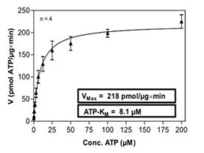 Abnova Human KDR (NM_002253, 807 a.a. - 1356 a.a.) Partial Recombinant