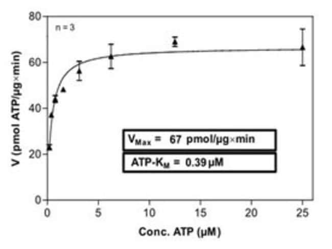 AbnovaHuman ABL1 (NM_005157.3, 118 a.a. - 535 a.a.) Q252H mutant Partial