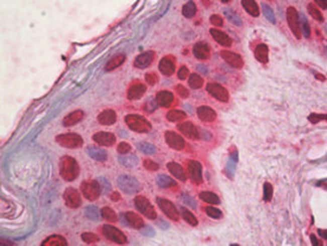 HMGB1 Mouse anti-Human, Clone: IMG19N15F4, Abnova 50μg; Unlabeled:Antibodies