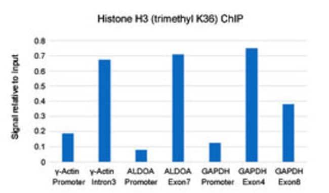 Histone H3 (trimethyl K36) Rabbit, Clone: RM155, Abnova 100µg; Unlabeled