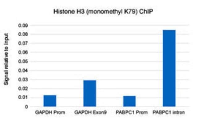Histone H3 (monomethyl K79) Rabbit, Clone: RM147, Abnova 100µg; Unlabeled