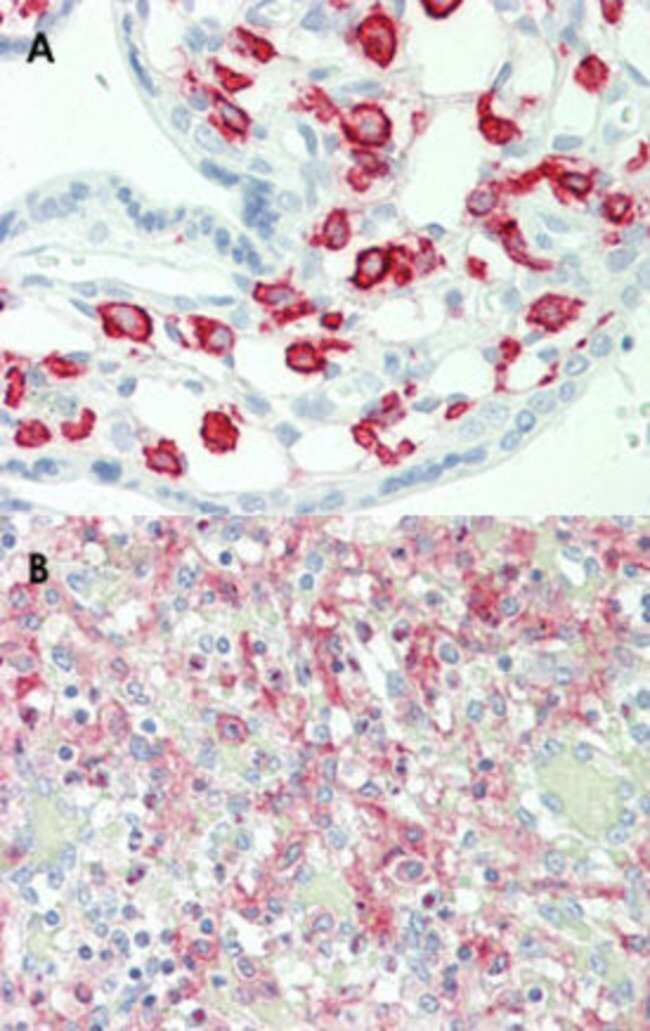 FCGR2A Mouse anti-Human, Clone: 13D7, Abnova 50μL; Unlabeled:Antibodies