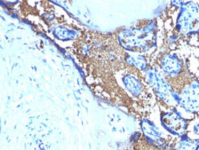 GYPA Mouse anti-Human, Clone: SPM599, Abnova 100μg; Unlabeled:Antibodies