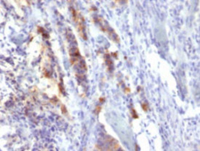 MUC5AC Mouse anti-Human, Clone: SPM488, Abnova 100μg; Unlabeled:Antibodies
