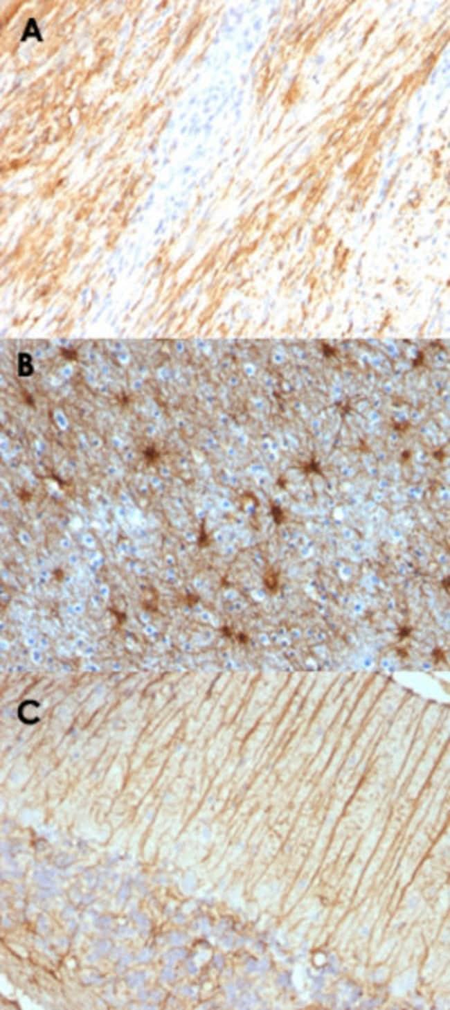GFAP Mouse anti-Human, Rat, Clone: ASTRO/789, Abnova 100μg; Unlabeled:Antibodies
